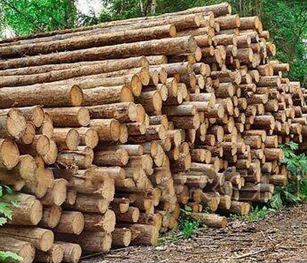 德国云杉原木厂家