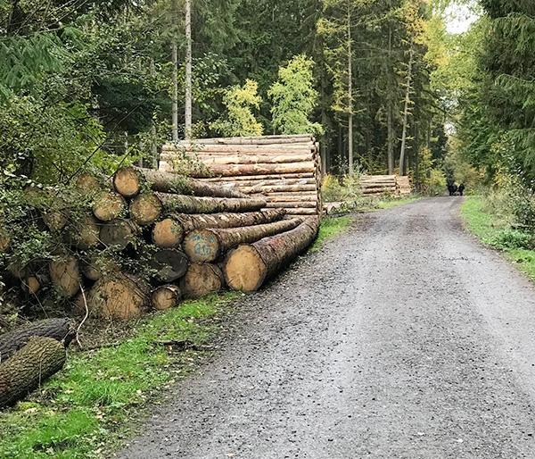 挪威云杉原木