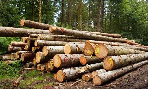 什么是云杉原木的天然耐久性?