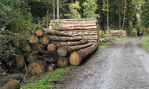 云杉木材的优缺点?